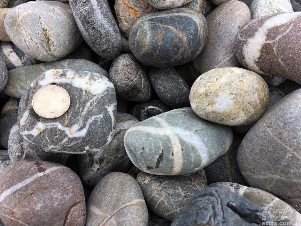 Tiger Mexican Beach Pebble