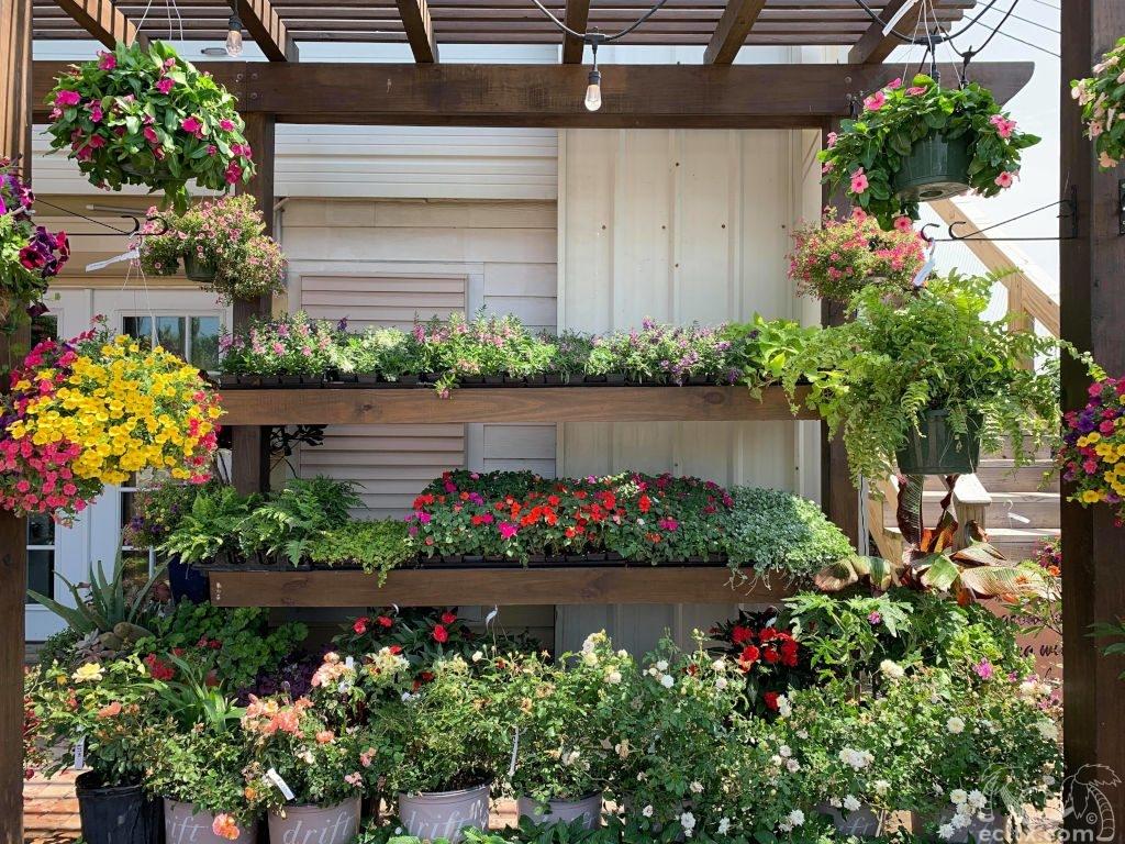 Earth Creations Landscaping Nursery Plants
